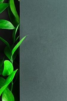 Tea tree green leaves on dark background