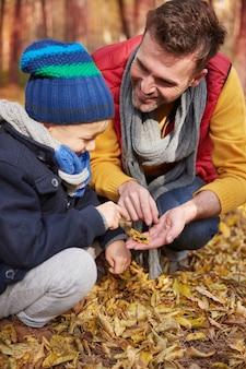 Insegnare come appare la vita animale nella foresta
