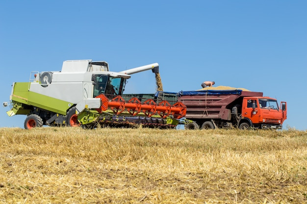 技術者は収穫のためにフィールドで働きます