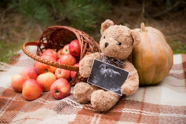 Teddy bear holding ultrasound photo of baby, autumn with basket and apples