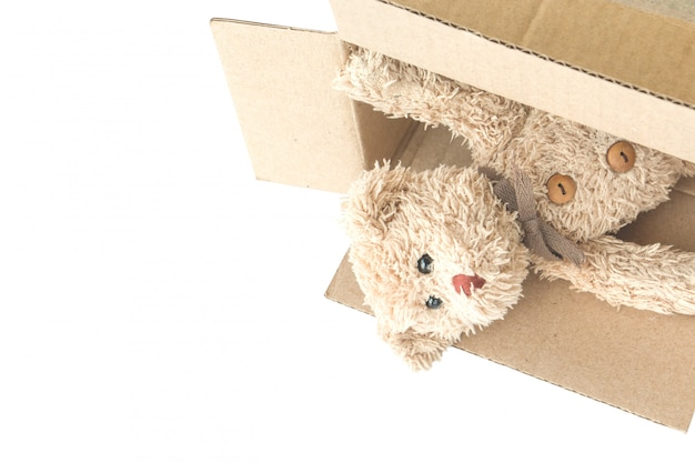 Teddy bear is playing cardboard box