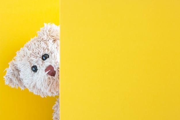 테디 베어 놀이는 판지로 숨바꼭질, 귀여운 인형 장난스럽고 행복한 느낌을줍니다.