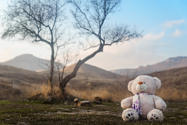 Teddy bear toy sitting under a tree in the mountains