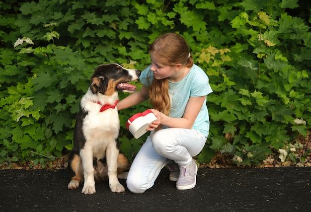 10대 소녀는 빨간색 나비 넥타이 하트 선물 상자를 입은 재미있는 귀여운 호주 셰퍼드 3색 강아지를 줍니다. 발렌타인 데이. 집 밖의. 여름 공원에서.
