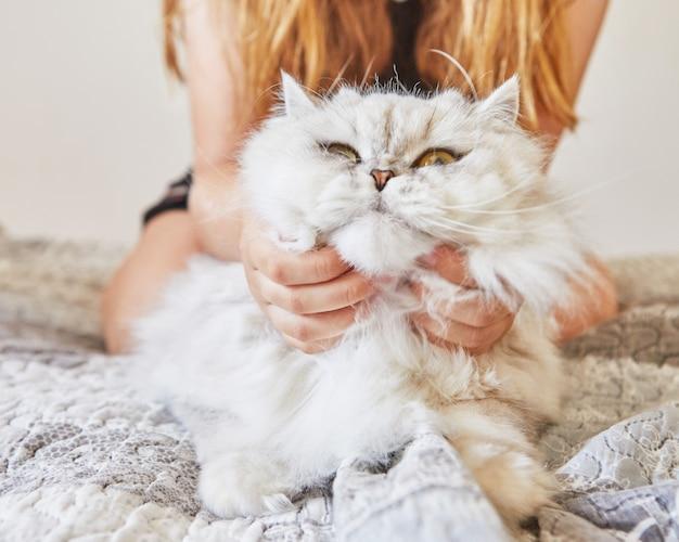 십 대 소녀는 영국의 장발 흰 고양이의 목을 긁습니다.