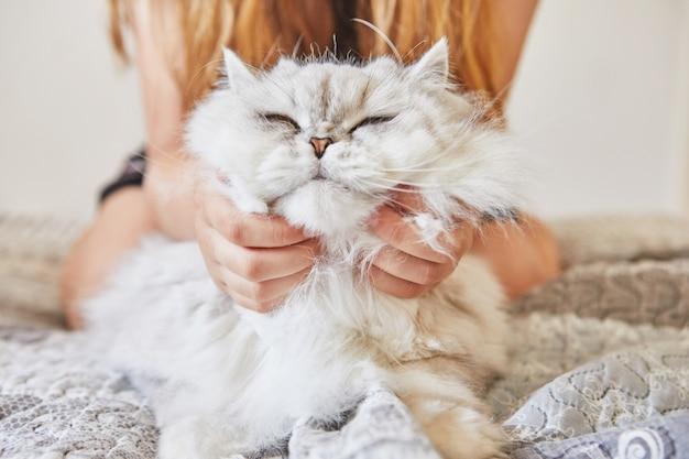 10대 소녀가 영국 장발 흰 고양이의 목을 긁습니다.