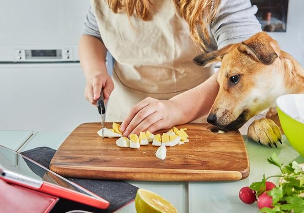 개를 키우는 십대는 온라인 가상 마스터 클래스를 준비하고 터치 스크린 태블릿에서 디지털 레시피를 봅니다.