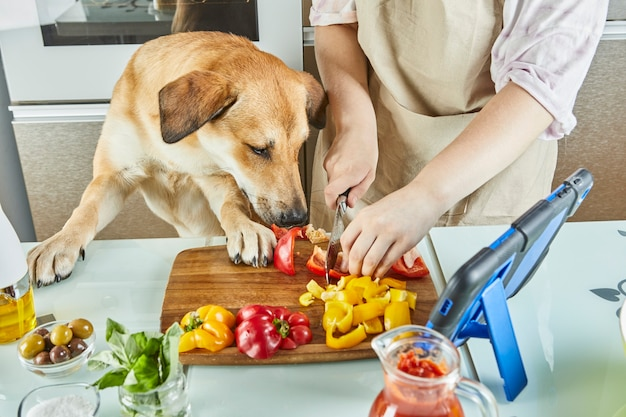 犬を連れたティーンエイジャーは、オンラインの仮想マスタークラスを準備しており、自宅のキッチンで健康的な食事を準備しながら、タッチスクリーンタブレットでデジタルレシピを表示しています。