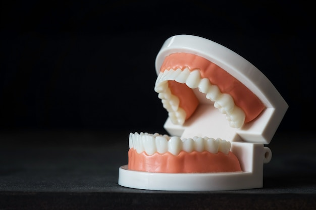 Teeth anatomy model for dental care concept