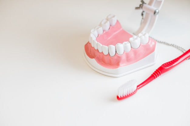 Зубная щетка и челюсть. гигиеническое лечение и сохраняйте белую здоровую улыбку. отличные советы по гигиене зубов. здоровая улыбка.