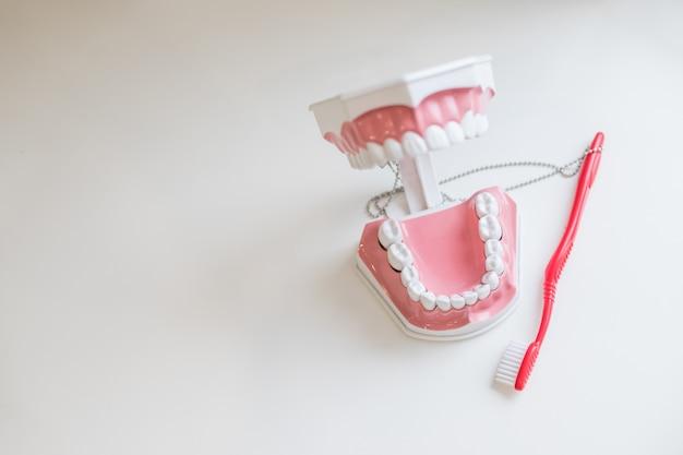 歯ブラシブラッシングモデル(teeth.jaw)は、歯科医院の歯科医院で歯のモデルをサンプルします。コピースペース