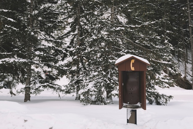 Telephone box in snowy forest
