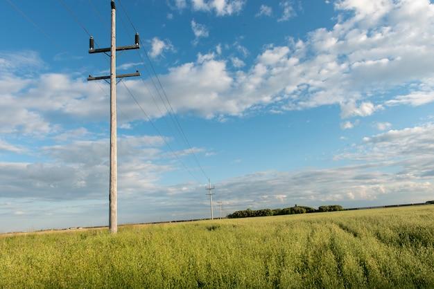 Телефонные столбы в поле, лоретта, манитоба, канада