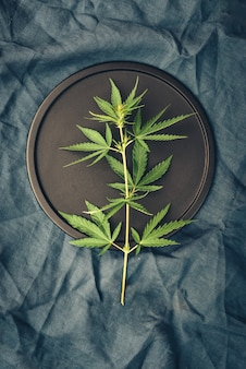Template with marijuana leaves on dark table for cannabis products, cbd oil