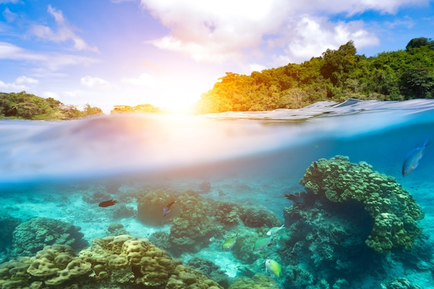 Шаблоны с подводными частями и кораллом, солнца, отделенные от воды.