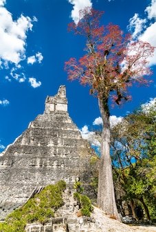 Temple of the great jaguar at tikal. unesco world heritage in guatemala
