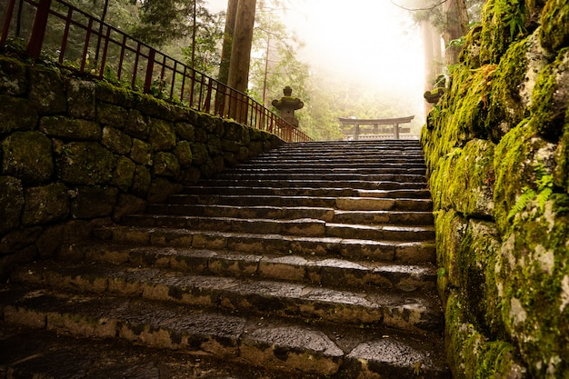 Temple in a japanese forest