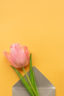 Tender pink tulip in elegant grey envelope on bottom of pastel yellow background. flat lay. copy space. place for text. concept of international women's day, mother's day, easter. valentines love day