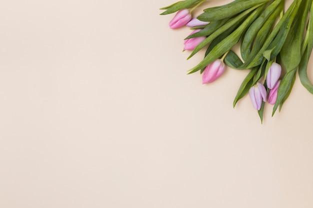 Нежные розовые тюльпаны сверху