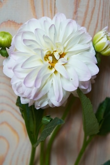 Tender still life with a white carnation carnation for mothers day or wedding in vintage style