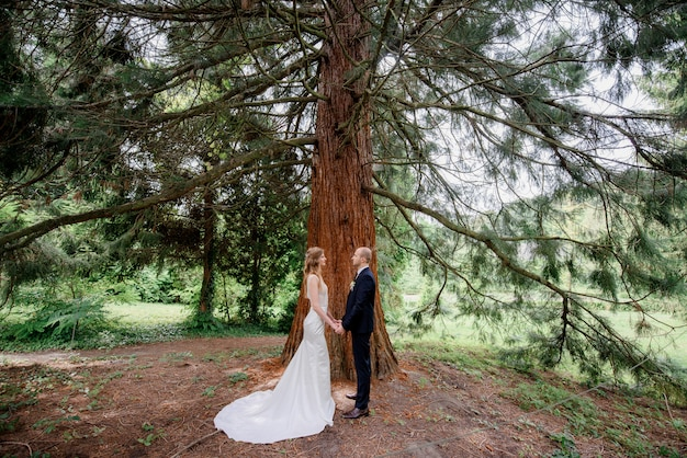 Tender wedding couple is standing near the huge pine in the national park
