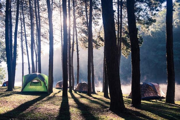 日の出と松林の下でキャンプするテント
