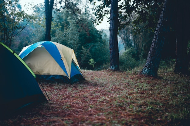 Tents and accommodation of tourists. sleeping in the forest in the winter