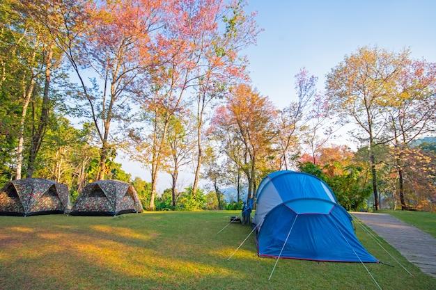 ドイステープ国立公園チェンマイタイのテントの森