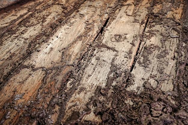 シロアリが損傷した木の床腐った損傷した木材は、シロアリが好むのでシロアリに食べられます