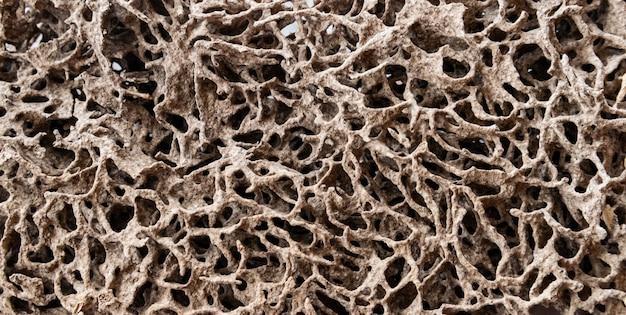 家の中で木や紙を食べるシロアリの巣。