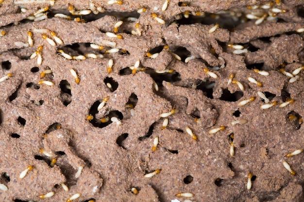 Termite in the tree