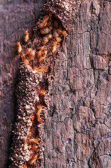 Рабочие-термиты маленькие термиты рабочие-термиты ремонтируют туннель селективный фокус
