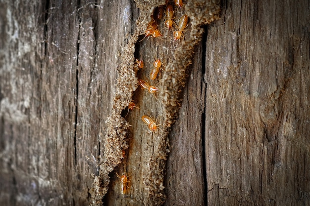 Termite workers small termites termites workers repairing a tunnel selective focus