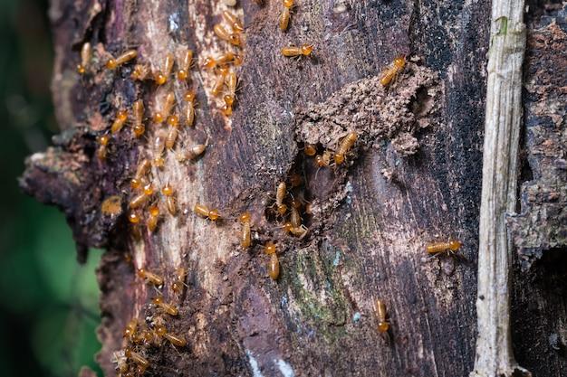 Manfaat Sarang Semut Untuk Kesehatan