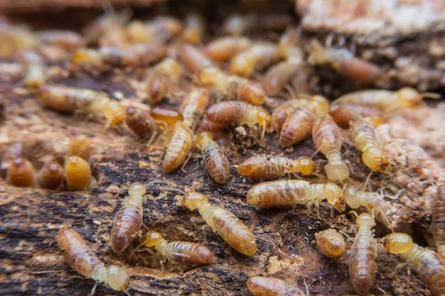 Termites on decomposing wood