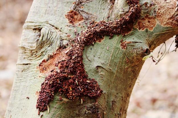野生の木イエシロアリを食べるシロアリ