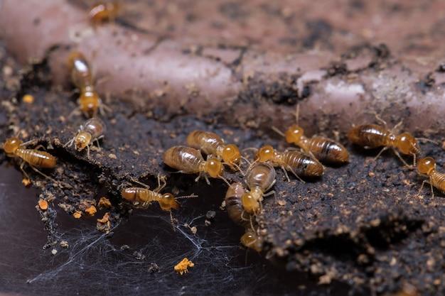 Termites eating wood