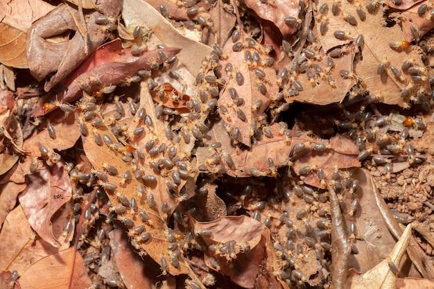 地上マクロ写真のシロアリ