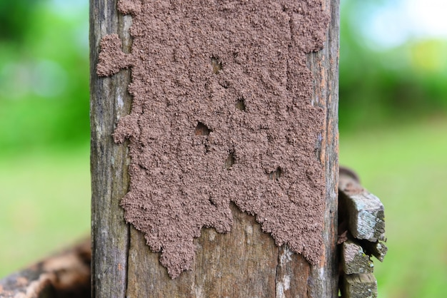 Termites on the stump, termite nest on a wooden post damaged by insect animal