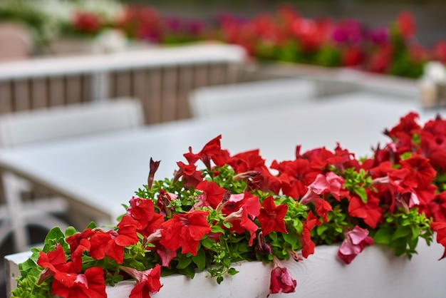 Terrace cafe decorates with a red flowers, close up