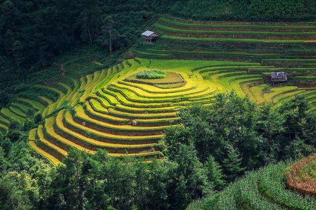 Mu cang jai, 베트남의 테라스 논.