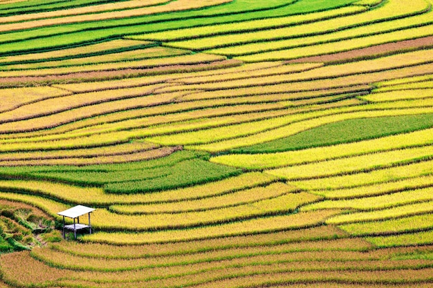 Terrace rice field, vietnam