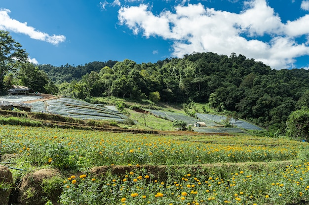 Terraced fields in a valley in the middle of the jungle with flowers sown