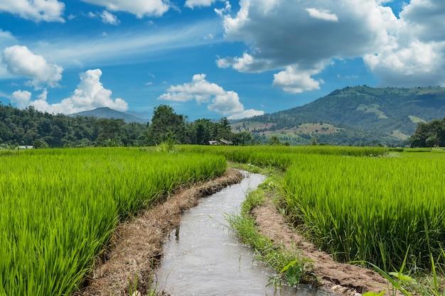 タイ、チェンマイ県の棚田