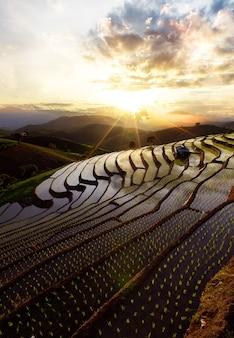 Террасное рисовое поле в мае чам, чиангмай, северный таиланд