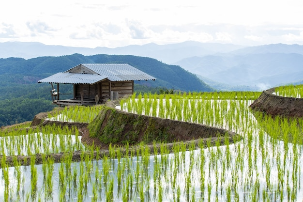 タイ北部メーチャムチェンマイの棚田