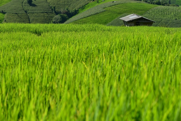 Terraced rice field on mountain, pa pong piang village, chiang mai province, northern of thailand