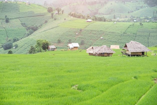 Terraced rice field  in pa pong pieng , mae chaem, chiang mai, thailand.