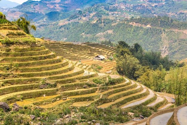 Terraced rice field in a sunny day in sapa, vietnam