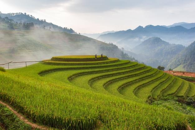 Terraced rice paddy field landscape of mu cang chai